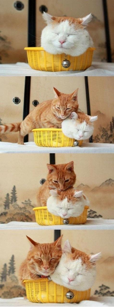 catsmush