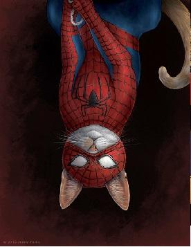 Spidercat2