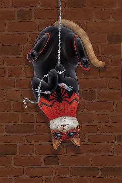 spidercat1