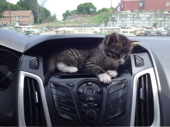 kittencar