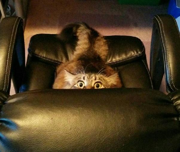 hiding