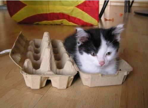 kittencarton
