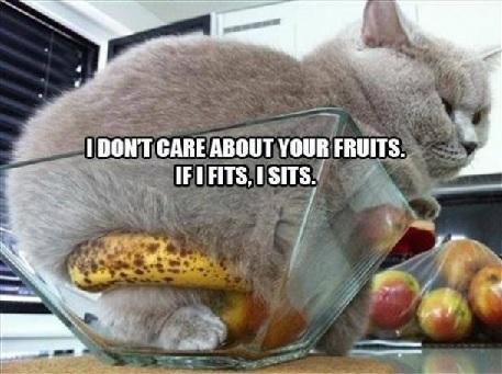 fruitbowlcat