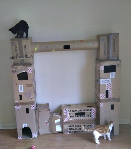 cathouse11