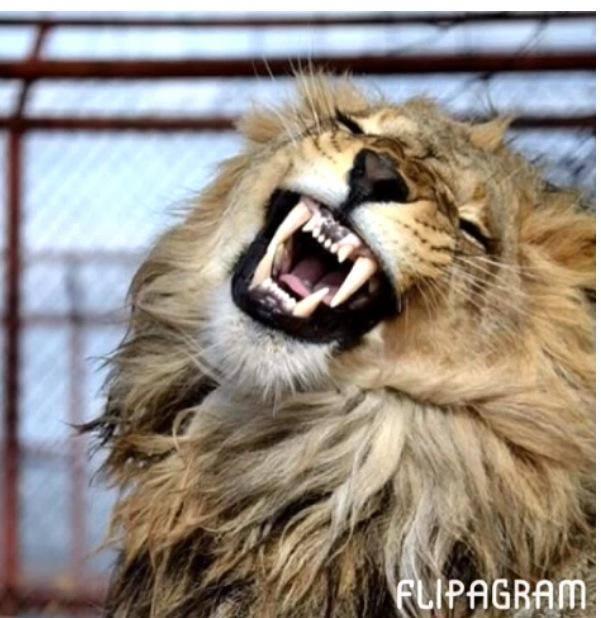 lionsmile