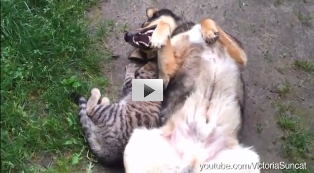 Dogs annoying cats with their friendship....