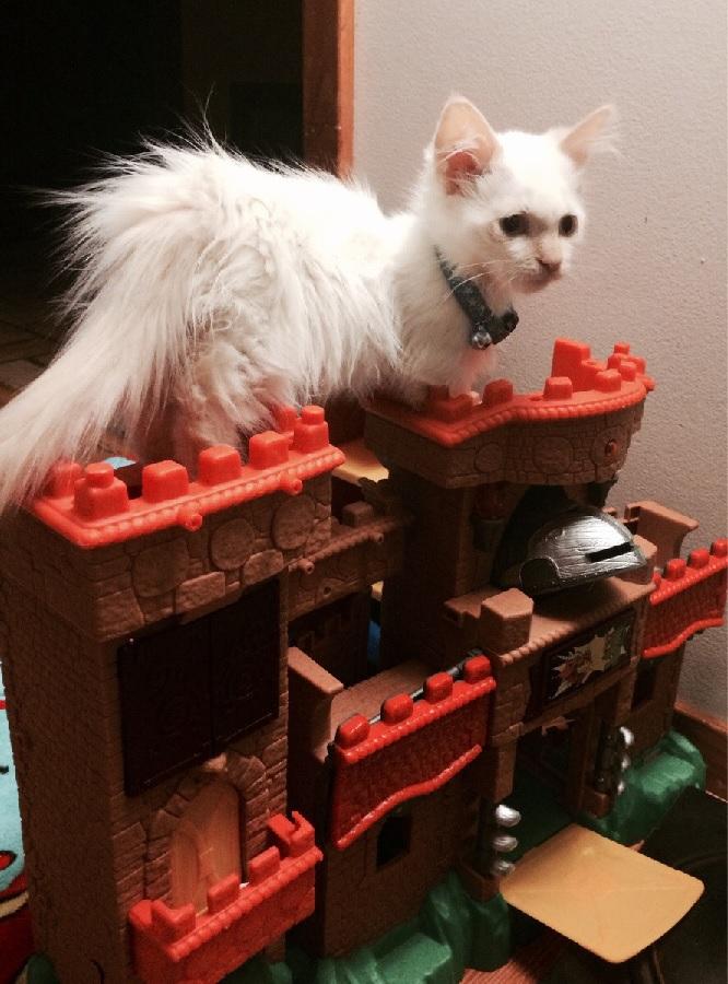 castlecat