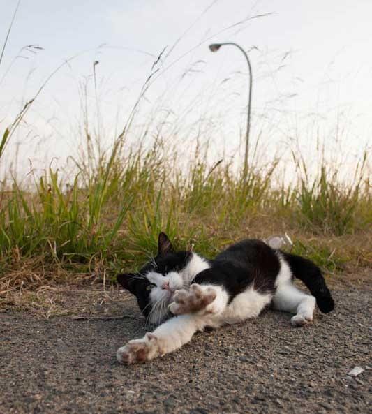 islandcats2