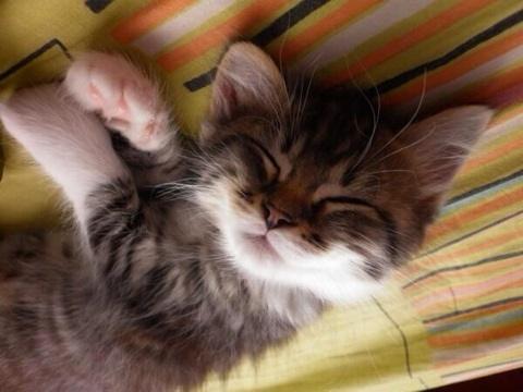 kitten13
