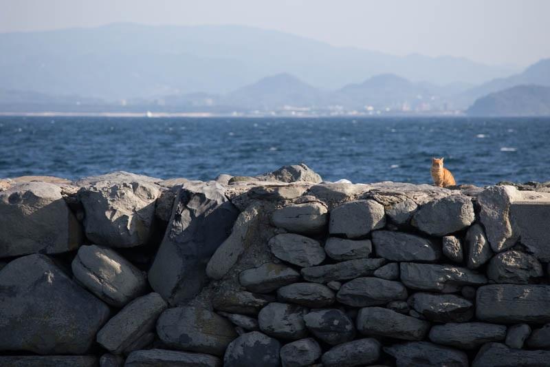 islandcats15