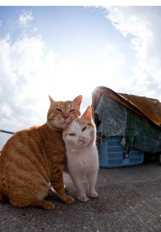 islandcats