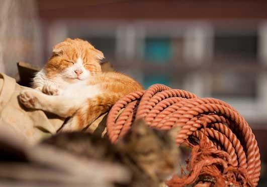 islandcats4