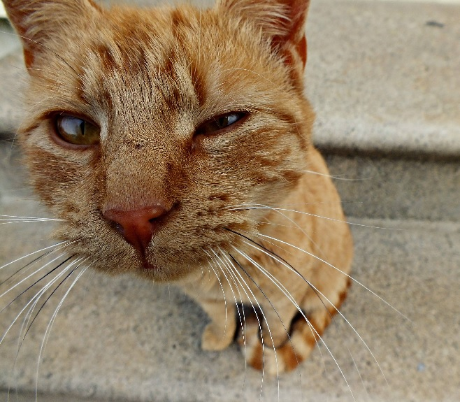 sniffingcat