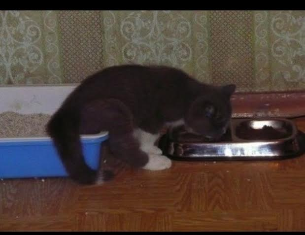 kitten11