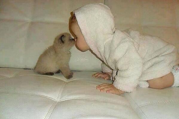 kitten23