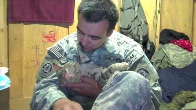 soldiercat