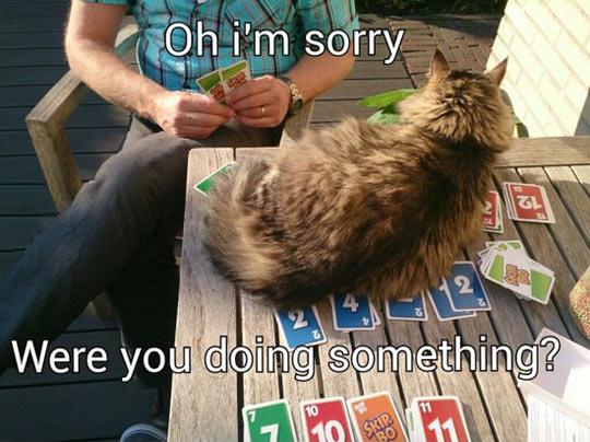 catinterupting