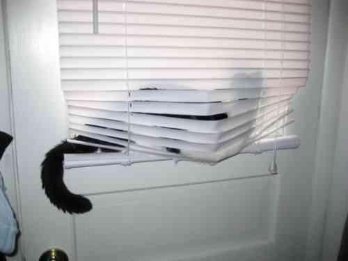 blinds12