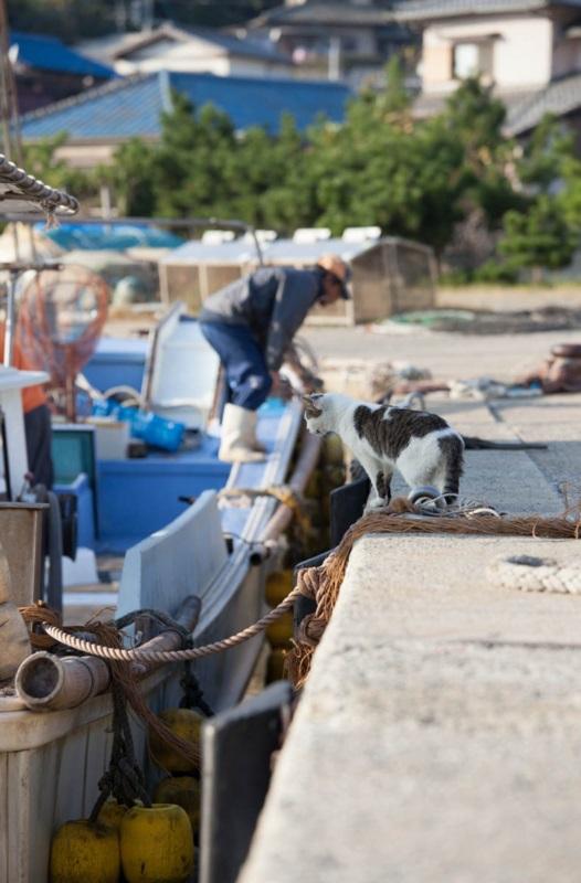 islandcats6