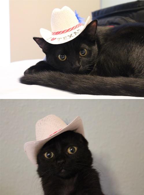 cowboycat