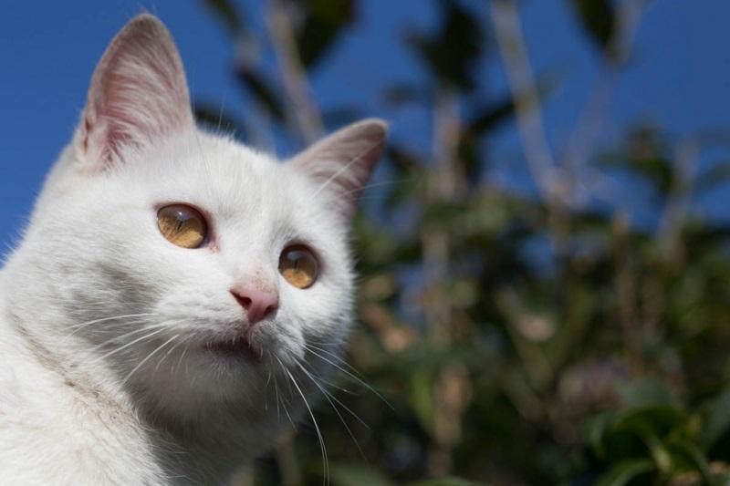 islandcats11