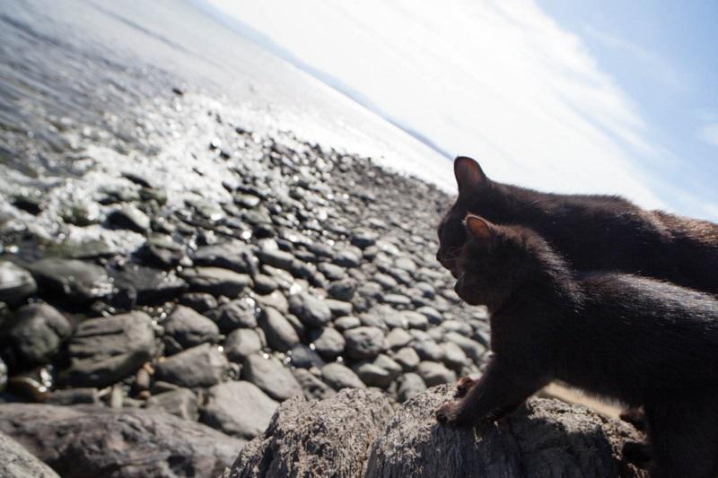 islandcats8