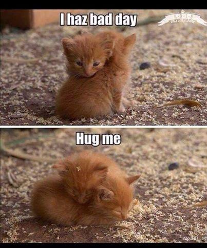 kitten18