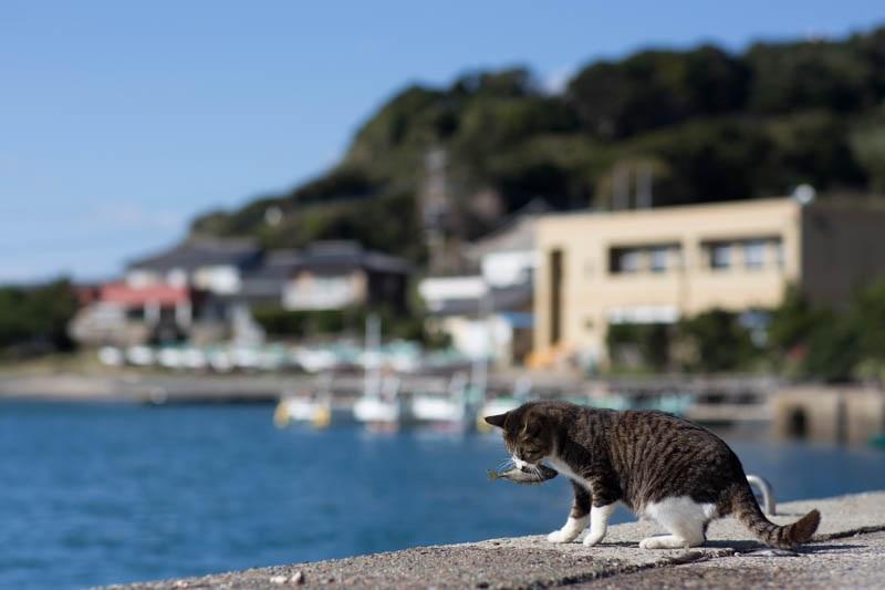 islandcats19