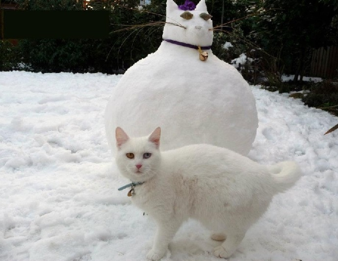caturday8