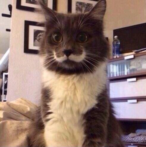 mustachecat