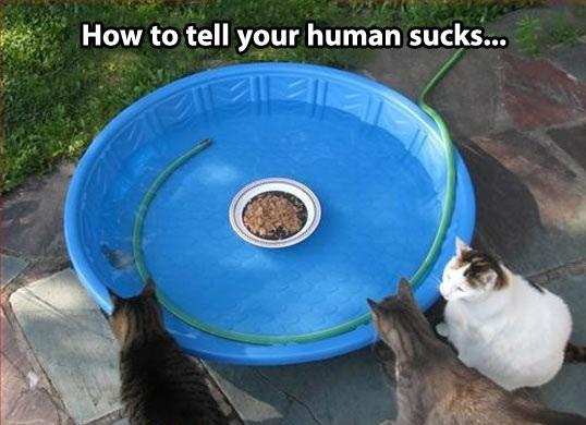 humanssuck
