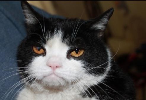 catdontcare