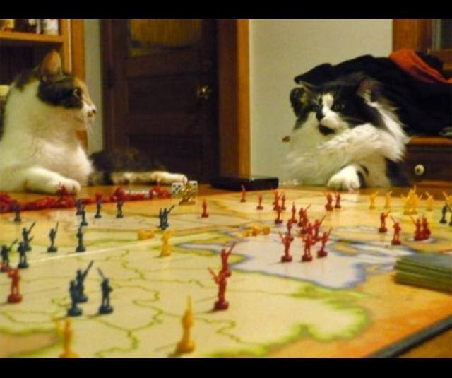 catstrategy