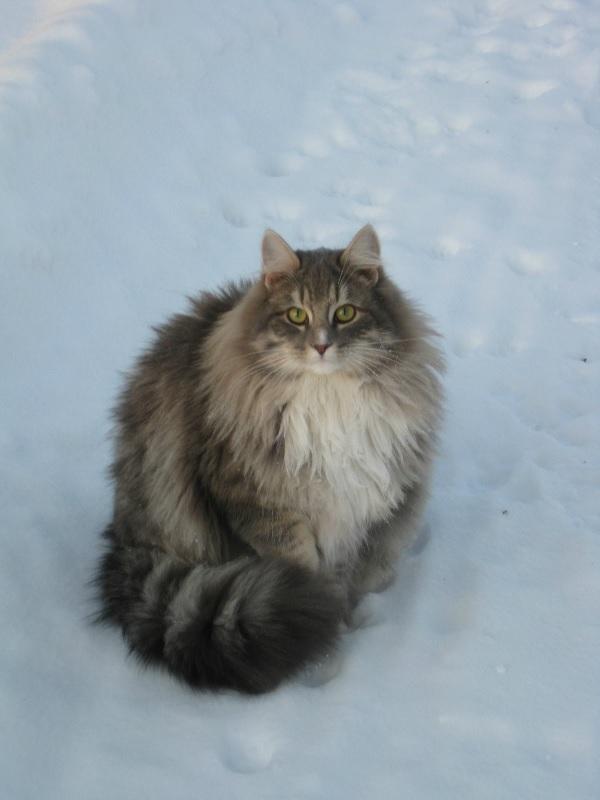 fluffycat