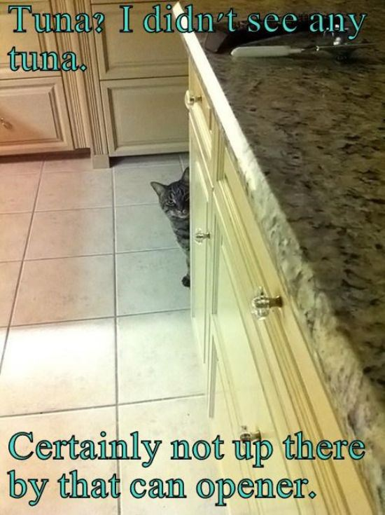 caturday2