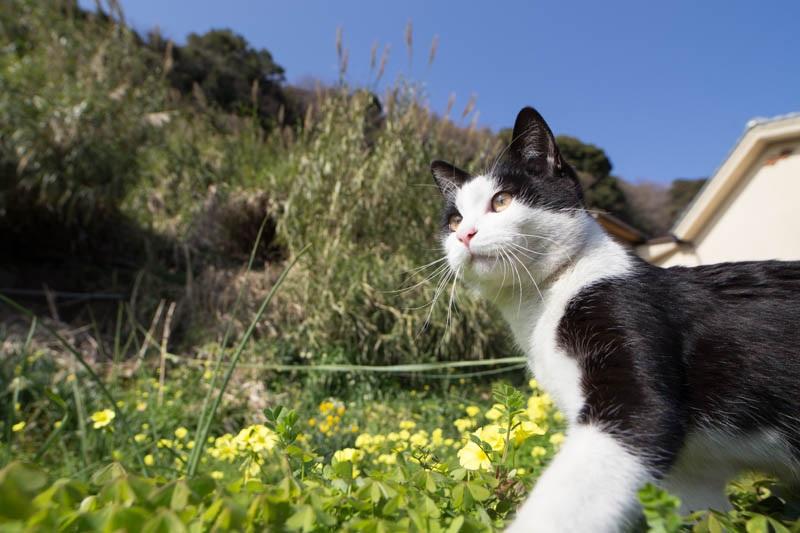 islandcats16