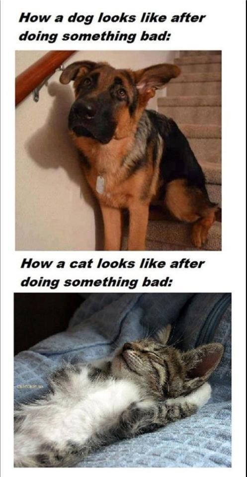 dogsvscatsbad