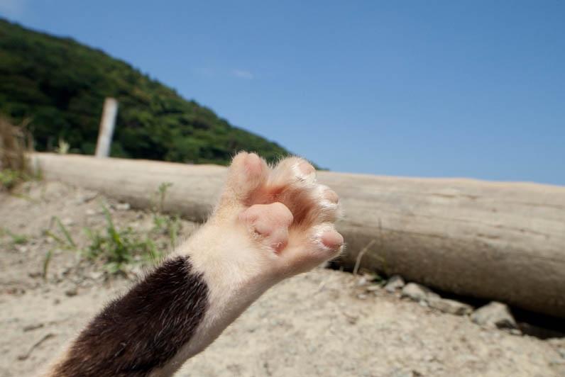 islandcats14