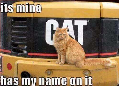 catmine