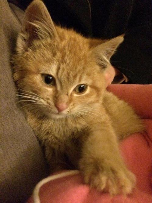 kitten17