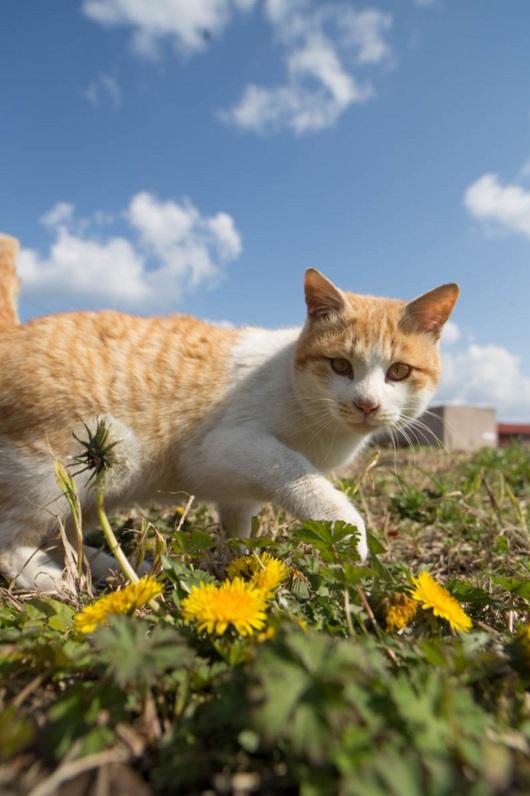 islandcats13