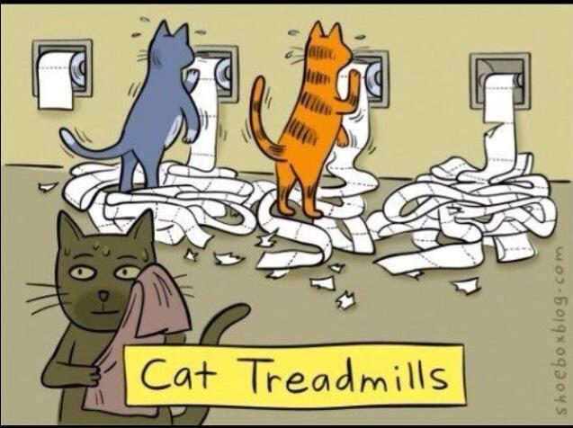 cattreadmill