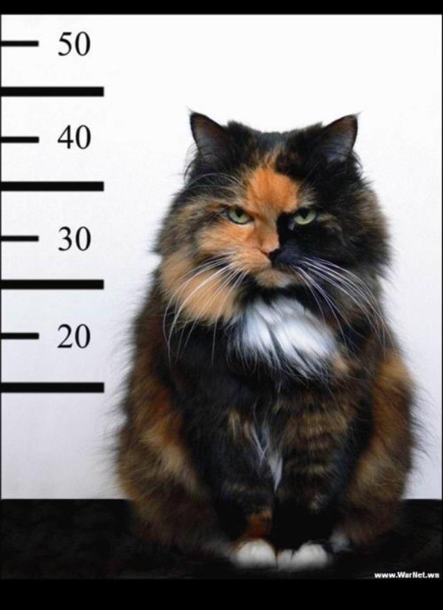 evilcat2