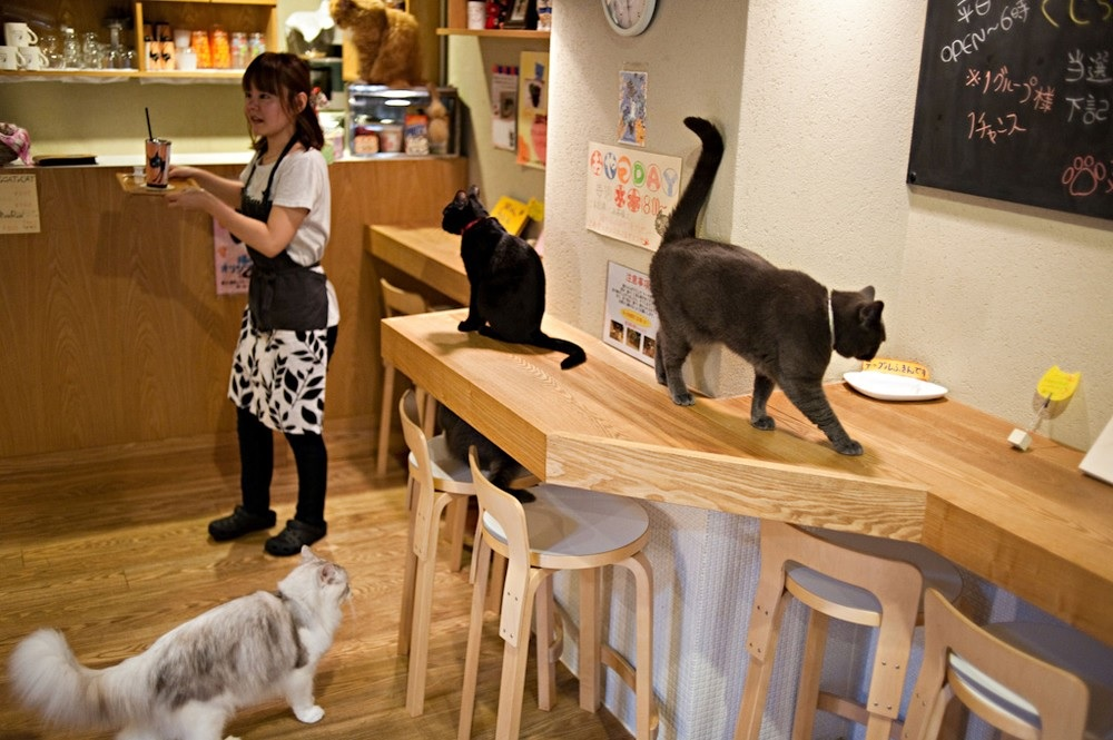 catcafe4