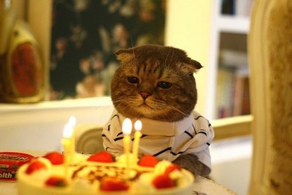 x0443-birthday-cat-sad.jpg