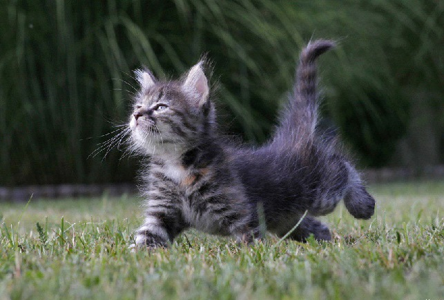 caturday4