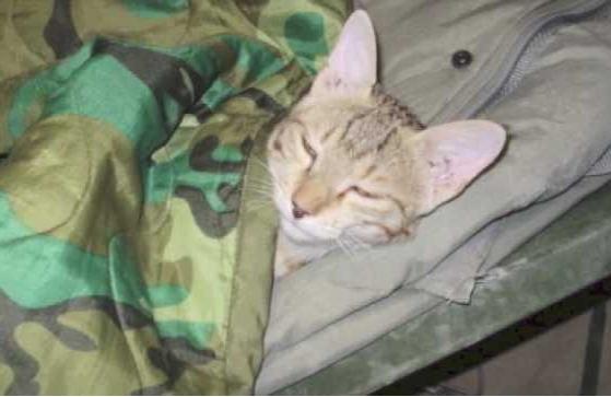 soldiercat2