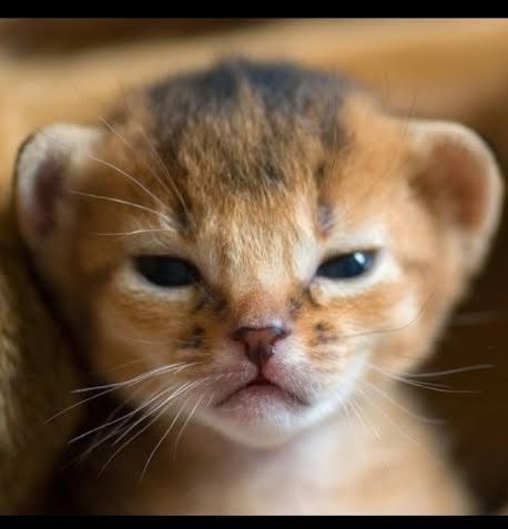 kitten14