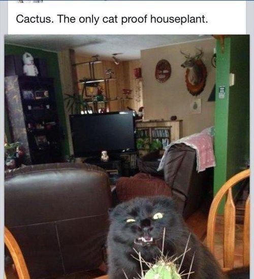 Catcactus
