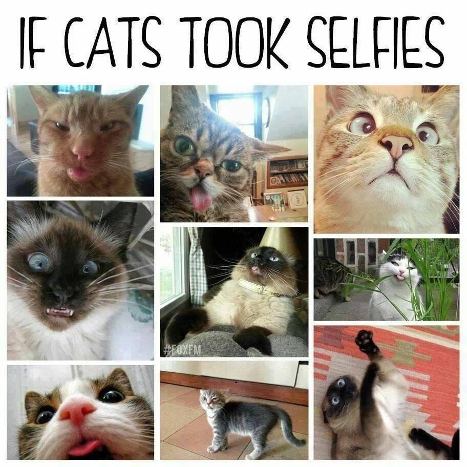 ifcatstookselfies